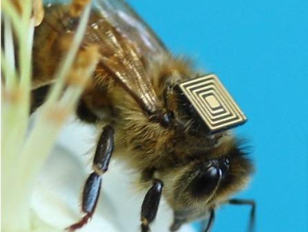 Bee RFID